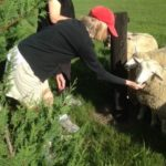 Carol Kirtz pets a sheep in New Zealand